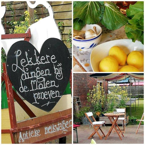 molen- in Dalfsen